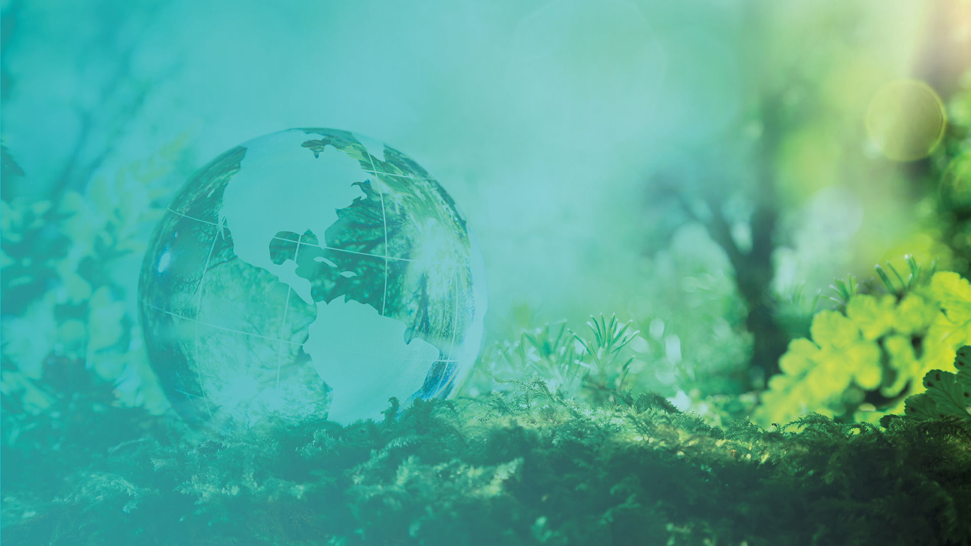 Image of a clear glass globe on mossy ground- Green Earth